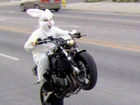 Wheelie rabbit