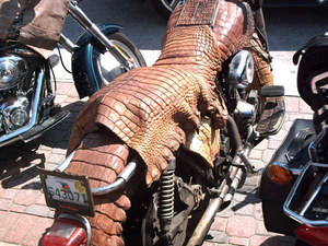 Alligator bike